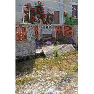 Photo 12 - Arche des roses