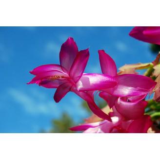 Photo 3 - Cactus